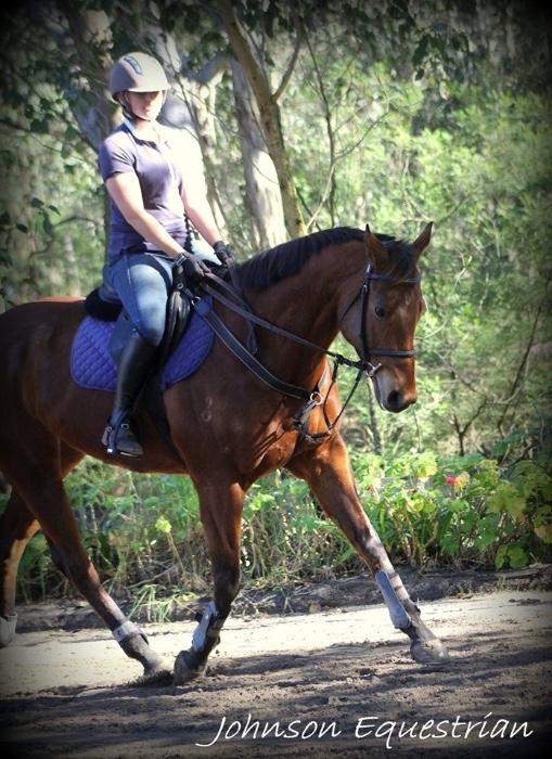 Sweet Thoroughbred Gelding