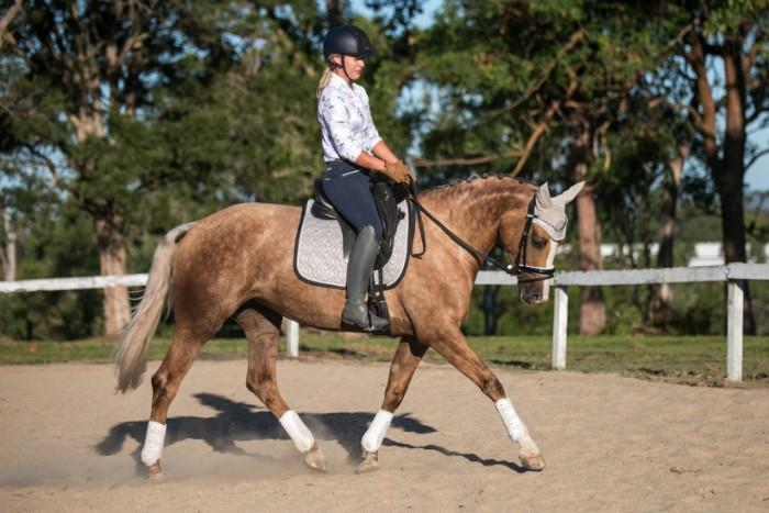 Golden Dappled + Super Safe Quiet Mare