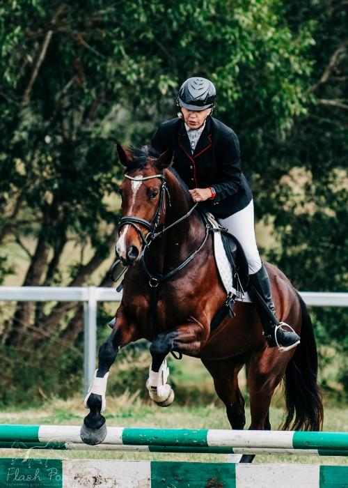 Multi-Talented 4yo Warmblood Mare