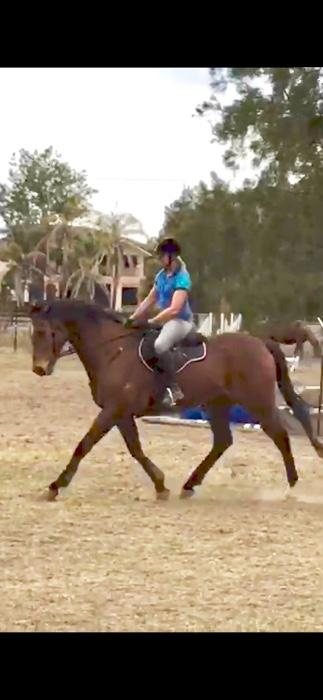 Showjumping and Eventing Prospect