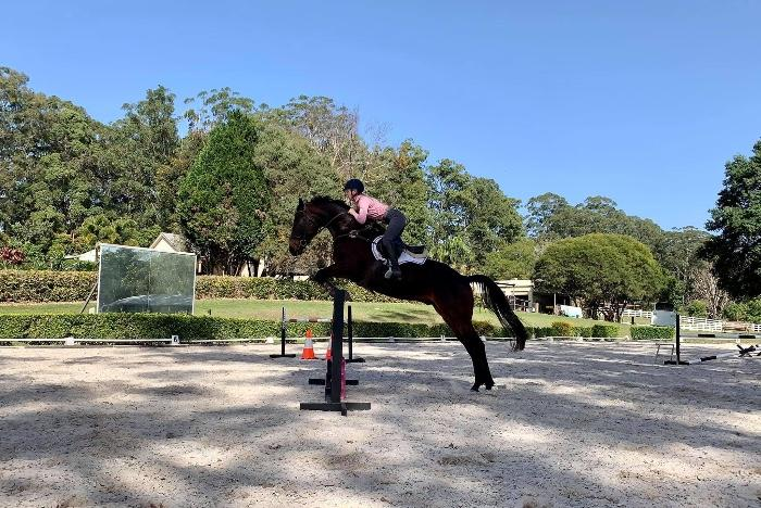 Talented Young Warmblood Gelding