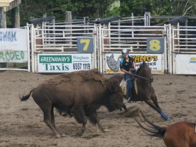 Wingham Bison Clinic.JPG