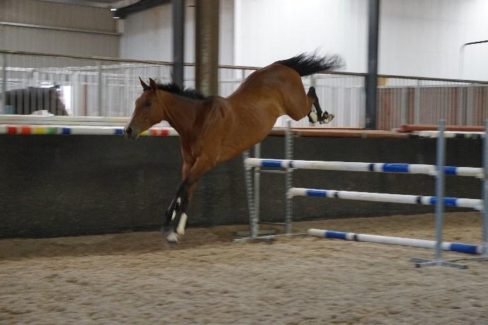 Talented Contenda Mare - Video added