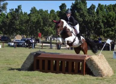 Brio Young Horse Class Jump Phase .jpg