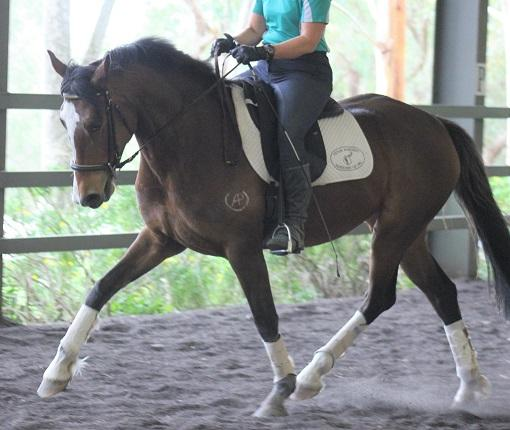 Lovely Dressage Mare