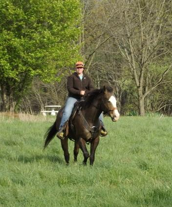 Incredible Quarter horse available