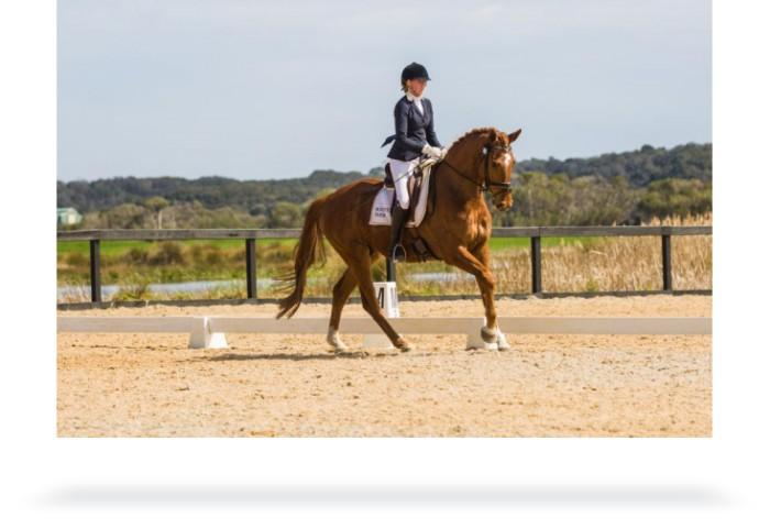 talented young dressage gelding bred for Grandprix