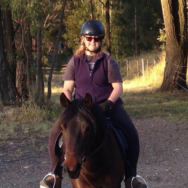Welsh Cob Section D Gelding