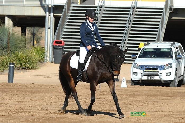 ATHLETIC & COMPETITIVE ASH MARE - URGENT SALE