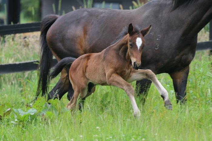 Colt by Stedinger out of Belcata mare