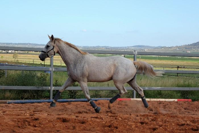 2-in-1 package - In foal to Balou du Rouet