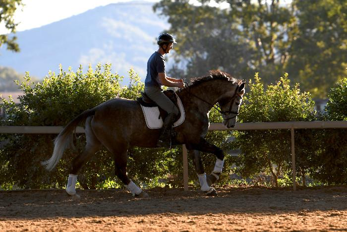 Dressage and Hunter Prospect
