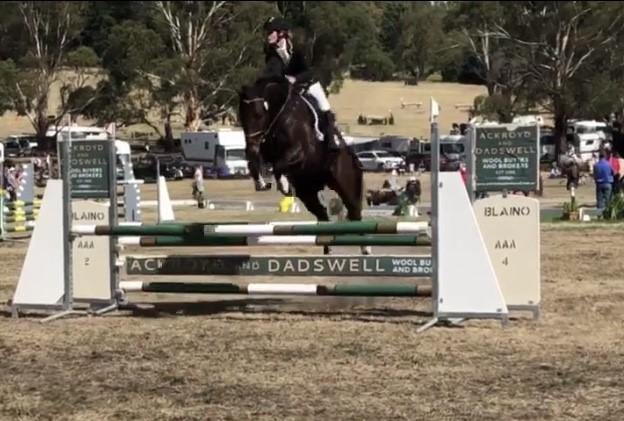 Mothers dream eventing mount