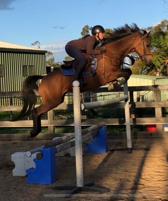 Super Talented Showjumping Pony