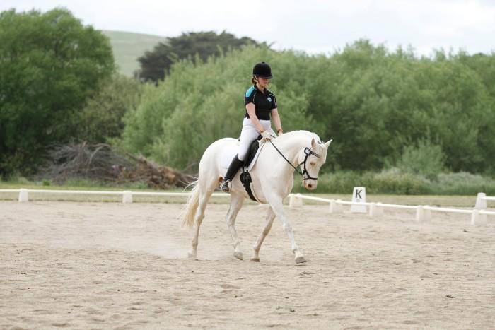 Your next dressage superstar!