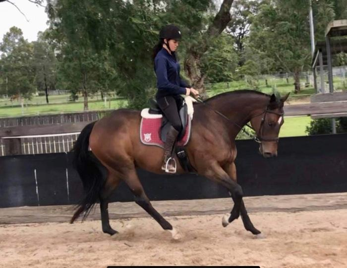 Easy Going Thoroughbred Gelding