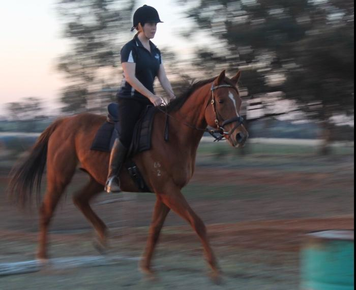 Beautifully soft & trustworthy gelding