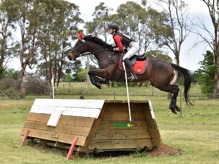 Safe, Reliable Interschool & Eventing Schoolmaster