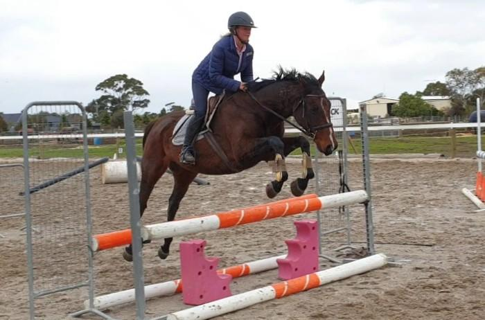 Sensible Scopey TB Gelding