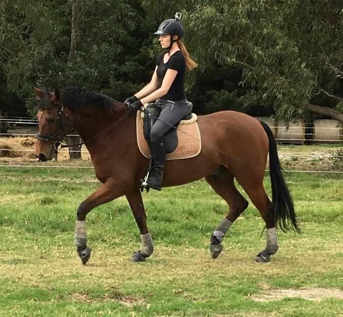 Stunning young eventing/ dressage prospect