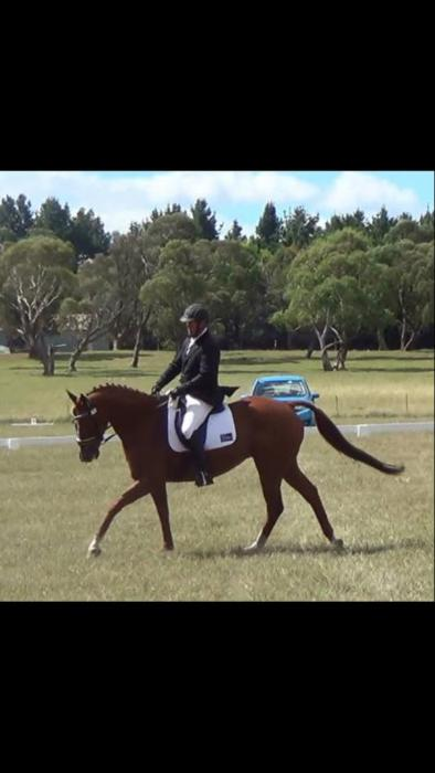 Established Novice Dressage Schoolmaster/Eventer
