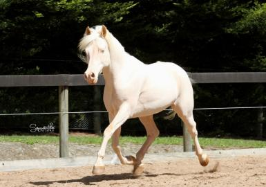 Paliglen White Delight - sire of Dreamer