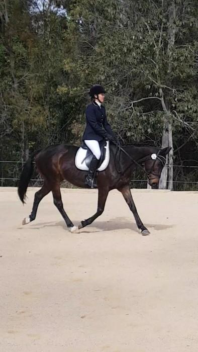 Lovely dressage/allrounder