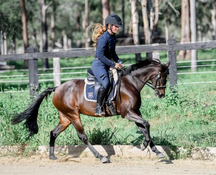 Stunning 13.2hh performance pony mare