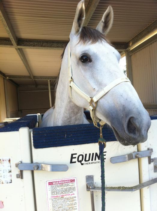 ECB Equine Hydrotherapy spa