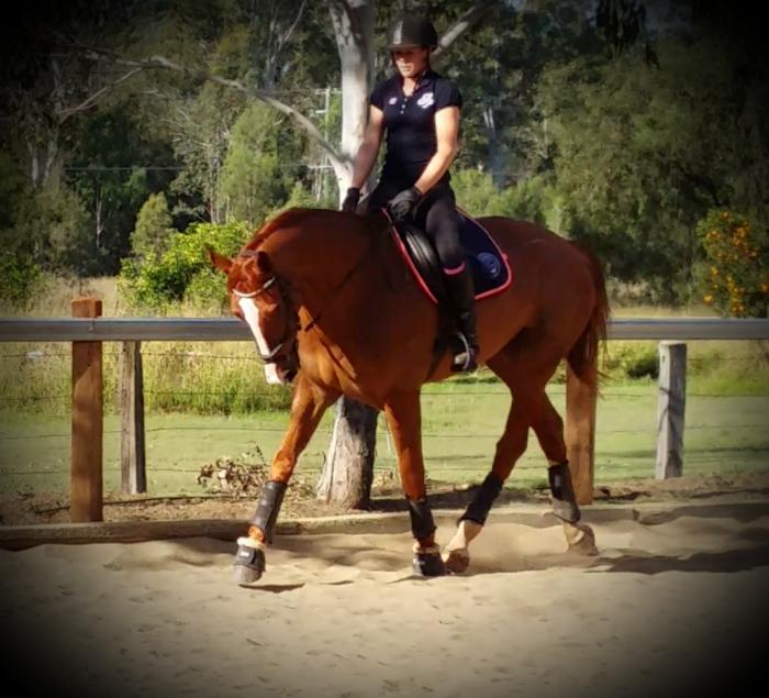 Beautiful natured 17.2hh, WBxTB 8yr old gelding.