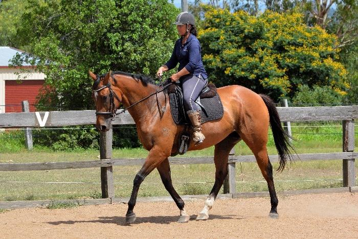 Lovely sweet thoroughbred mare