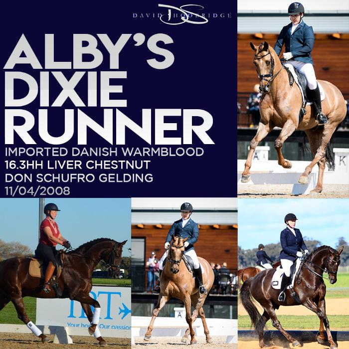 Alby's Dixie Runner