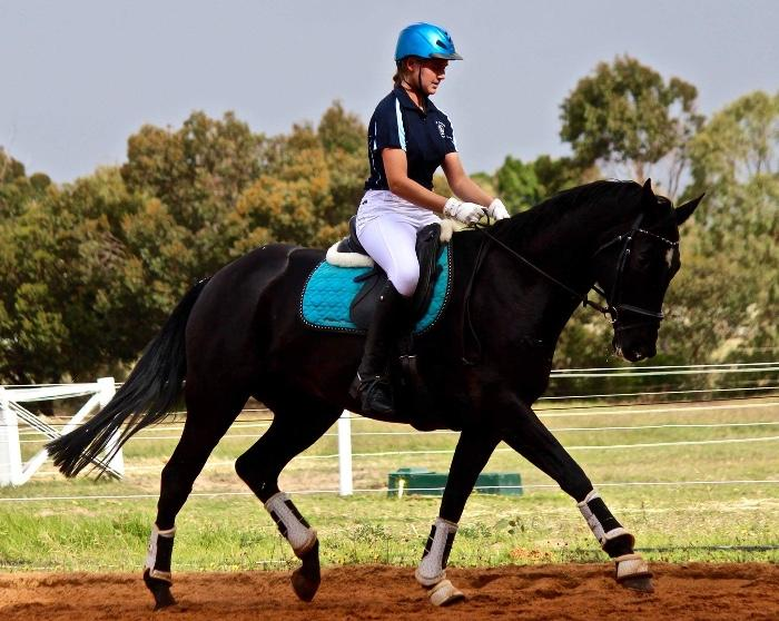 Stunning Dressage or Hack