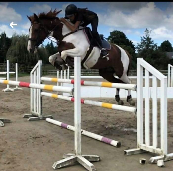 Showjumping mare