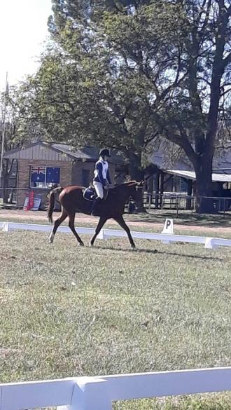 Fayme Dressage pic.jpg