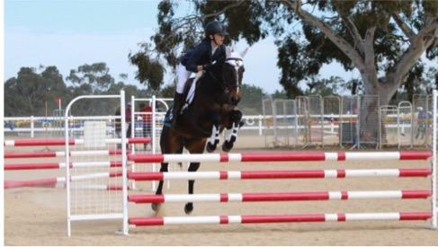 Interschools/Pony Club - Warmblood Pony mare