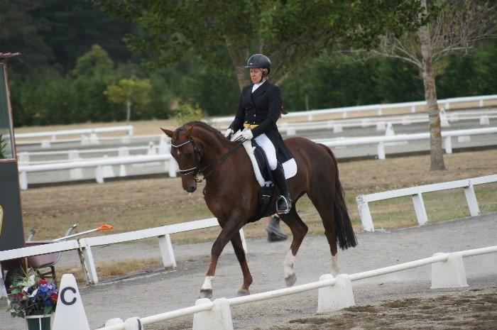 Graded Level 8 Dressage Mare