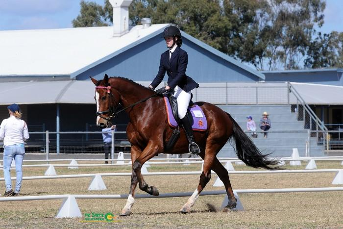 Competitive dressage horse reduced for quick sale