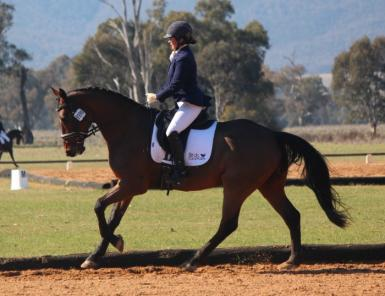 Young dressage Assoc