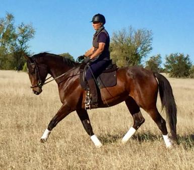 Satine by Casanova (4 yo)