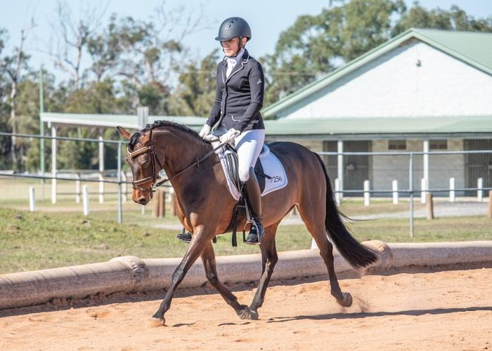 Talented and trainable Welsh B Gelding