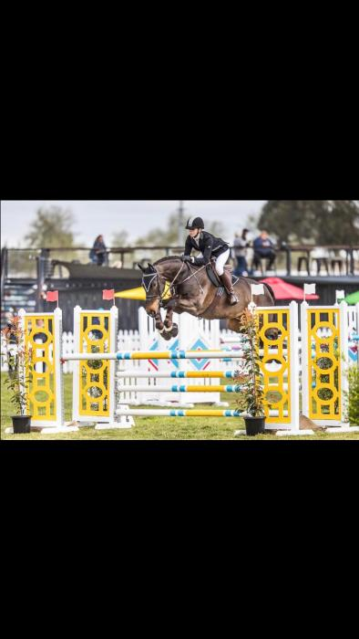 Show Jump, Event or Dressage