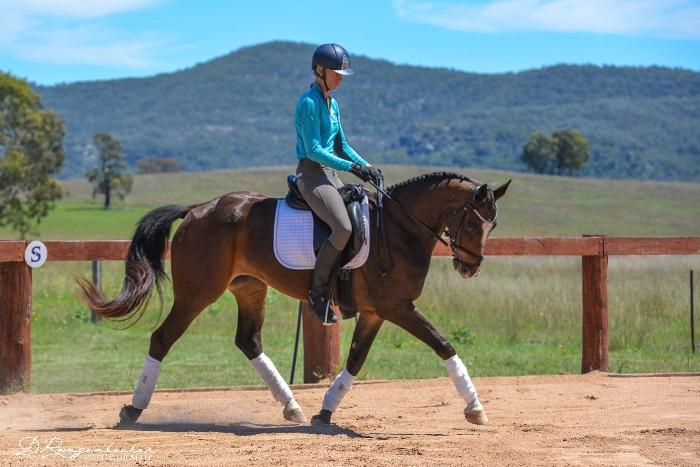 Elegant talented mare to ride or breed