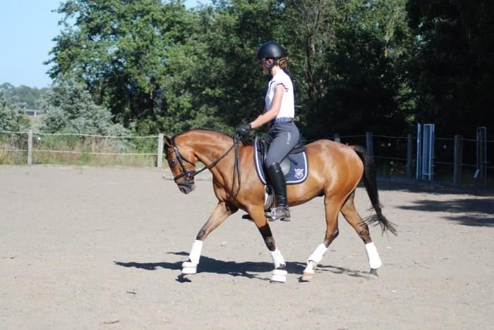 Pony Dressage Superstar