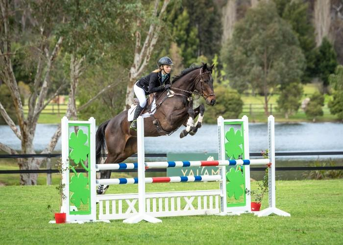 Talented Showjumping Prospect