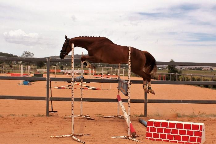 Modern Jumping Sport Horse by Check-In