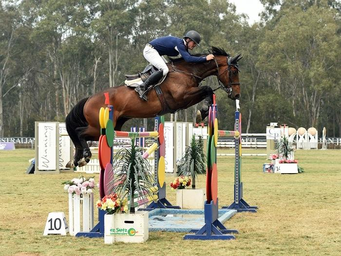 World Cup Showjumping Gelding