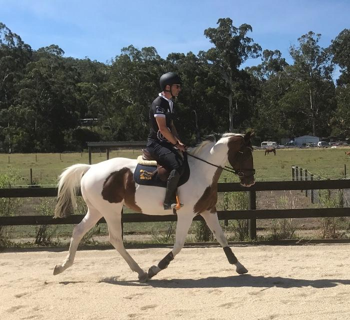 Warmblood Pinto All Rounder Jumping