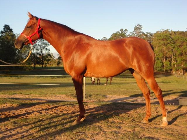 Registered Show Quality Mare Negotiable