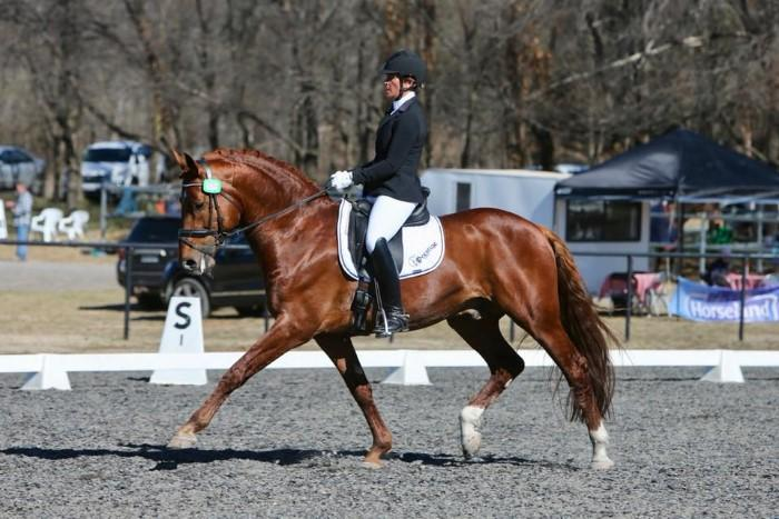 LL Tyranny - Royal Hit dressage stallion